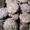 Galletas cookies de chocolate y nuez con espelta